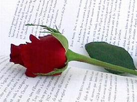 rose111